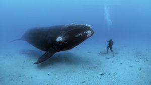 Source: Brian Skerry/National Geographic